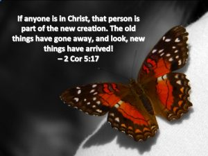 Butterfly-New-Creation