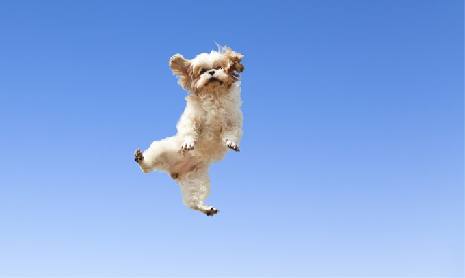 joy is happier than happy � by bilyana de soto good news
