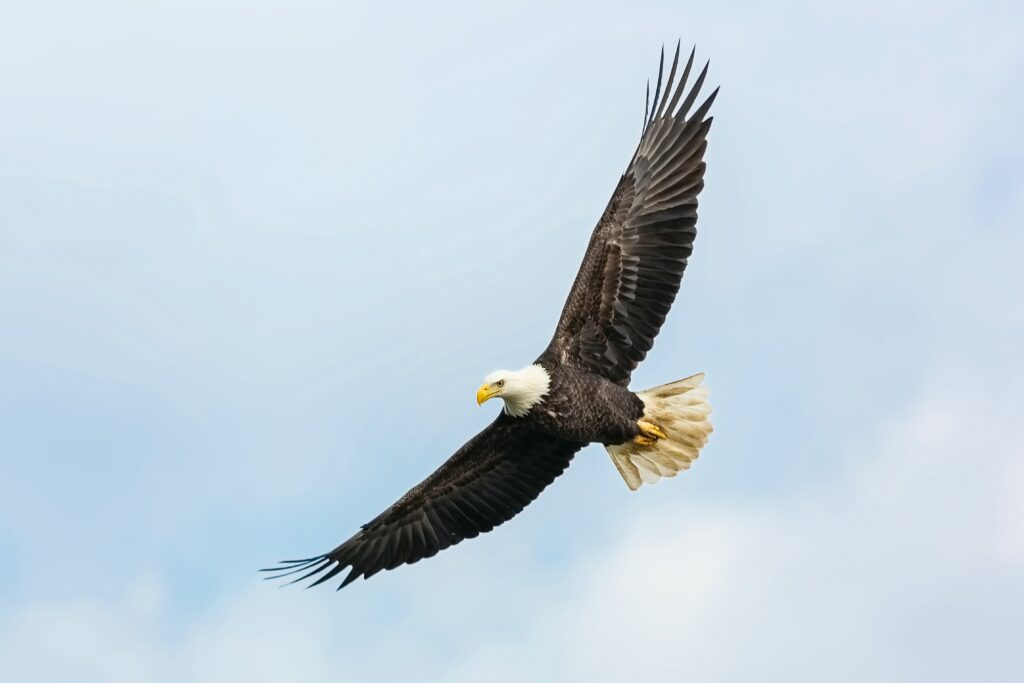 How to Soar on Wings of Eagles