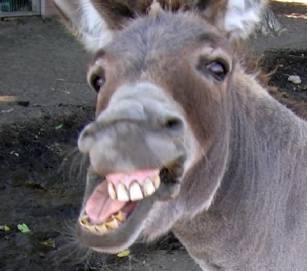 Amaterasu é o maior counter de Bijuu's Full. - Página 2 What-Do-You-Use-Donkeys-For